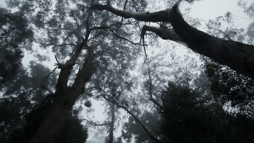 Long camera track through a dark forest   Shutterstock HD Video #5811482