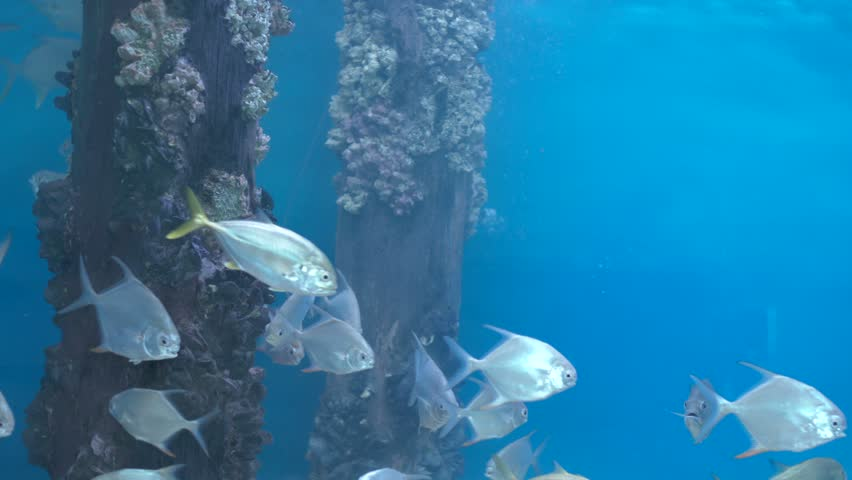 Some silver fish swimming when a wave crashes on them   Shutterstock HD Video #5867852