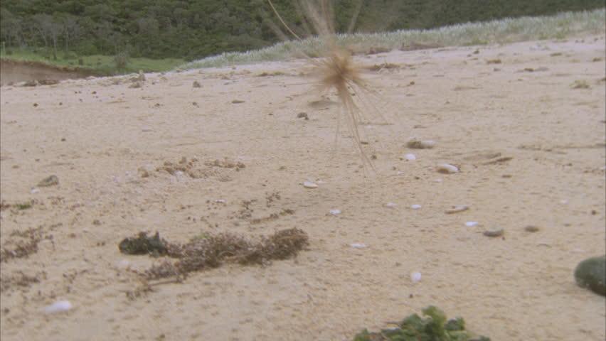 Header of tumbleweed