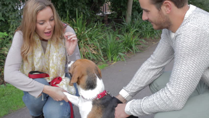 Couple exercising pet beagle in city park.Shot on Canon 5D MkII at a frame rate of 25fps