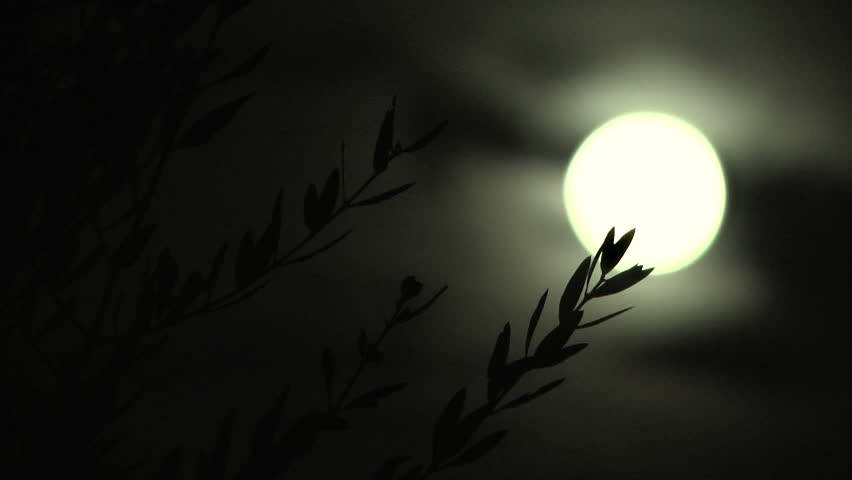 Full moon behind olive branches in a calm night. | Shutterstock HD Video #5892002