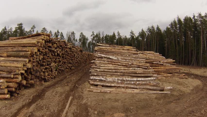 Header of forestry