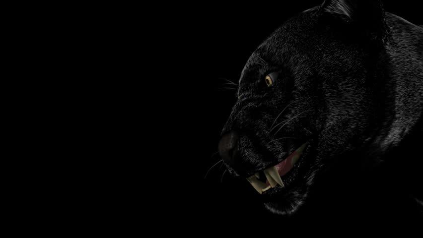 Kitti or black danger stock footage video 601993 shutterstock voltagebd Images