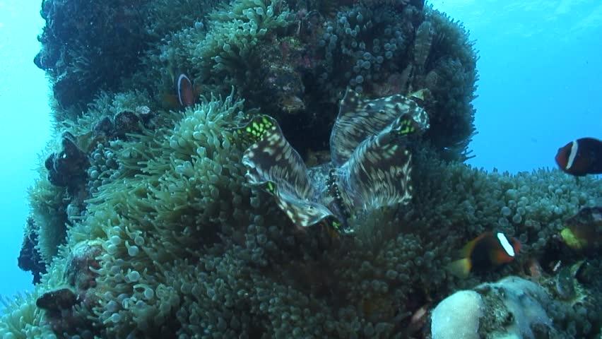 Anemonefish | Shutterstock HD Video #6048272