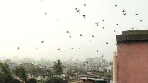 A flock of birds take flight in the morning over the urban sprawl rooftops of Calcutta/Kolkata, Bengal, India. HD 1920 by 1080.