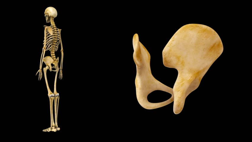 Pubic Bone Stock Video Footage 4k And Hd Video Clips Shutterstock