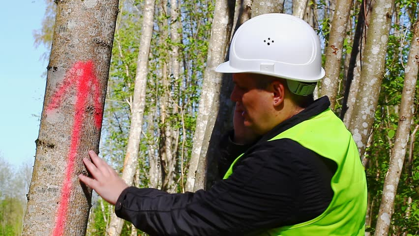 Lumberjack with cell phone near marked tree in forest