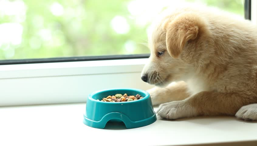 When Can You Feed Puppies Soft Food