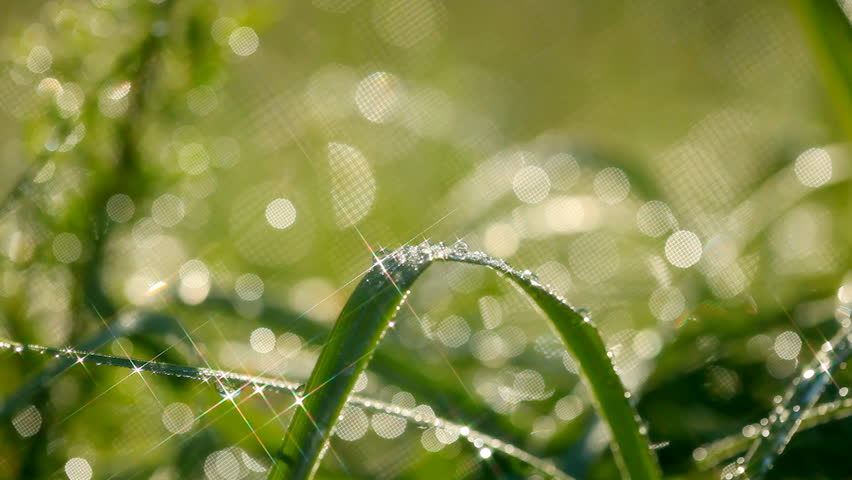 Green grass with waterdrops. Shallow DOF. Shot with motorized slider and star filter | Shutterstock HD Video #6339392