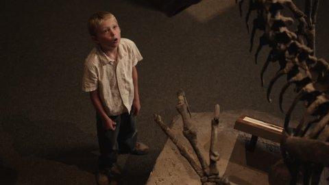 Medium Shot Boy (10-11) looking at dinosaur's skeleton in natural history museum