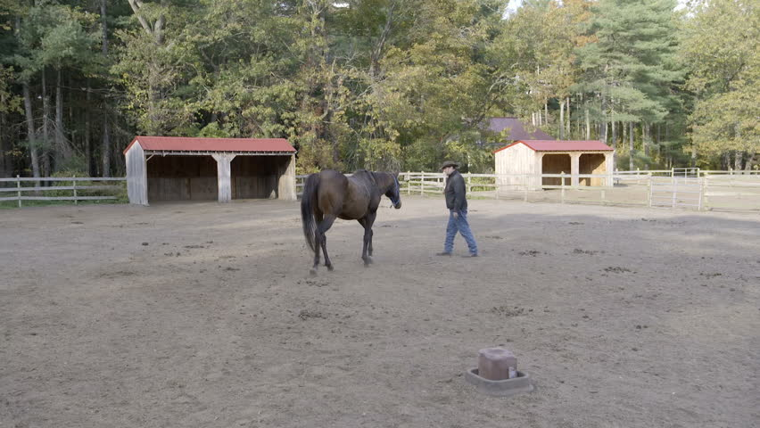 A man leads his horse as it walks around the corral