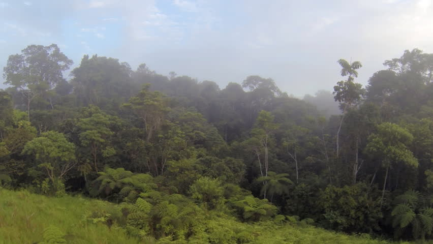 Rising up over the misty rainforest canopy at dawn in the Ecuadorian Amazon