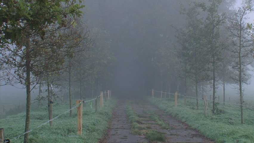 Oak lane in mist, old oak trees and new planted trees + pan. Countryside in The Netherlands. | Shutterstock HD Video #6588602