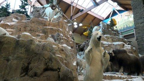 LEHI, UTAH - JUN 2014: Wildlife taxidermy winter animal display. Arctic wildlife natural life. Polar Bear and mountain sheep.Public display of wildlife taxidermy in natural settings. Educational.