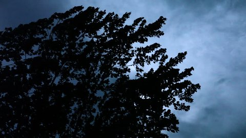Trees Blowing in Breeze, Silhouetted Against Dark, Sullen Sky