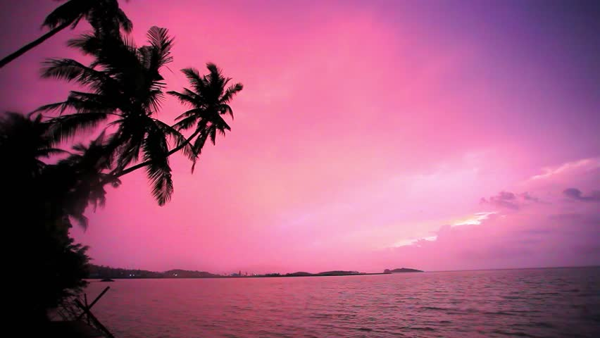 Sunset Over Beach Of Palm Trees Hd Wallpaper: Palm Tree Silhouette At Sunset On Tropical Beach Koh Samui