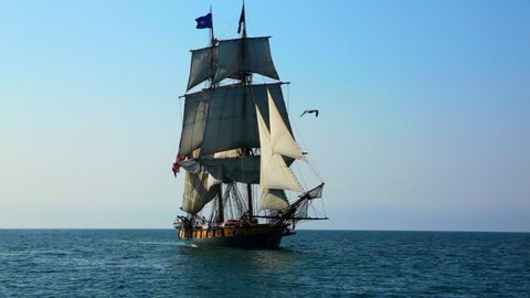Sea gull flies in front of old, historic tall ship.