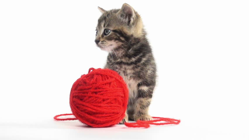 Kittens Playing With Yarn | www.pixshark.com - Images ...