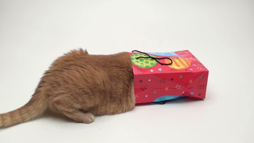 Curious Cat Peers Inside Birthday Stockvideos Filmmaterial 100 Lizenzfrei 689332