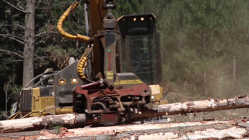 ARAUCANIA, CHILE - DEFORESTATION SITE - The mechanical arm of a specialized Bark Removing Machine strips the bark from a freshly chopped tree trunk in a forest in the Araucania.