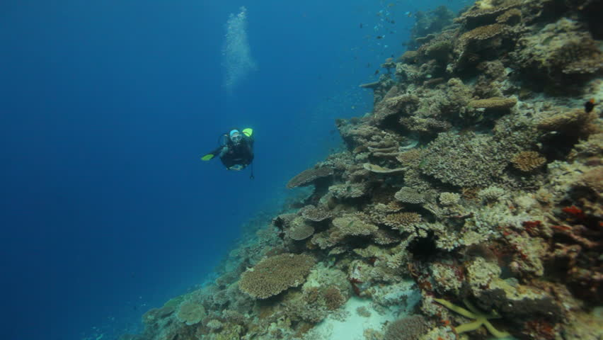 female diver diving along reef at good visibility