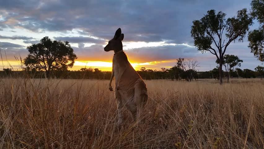 Australian pic photos 85