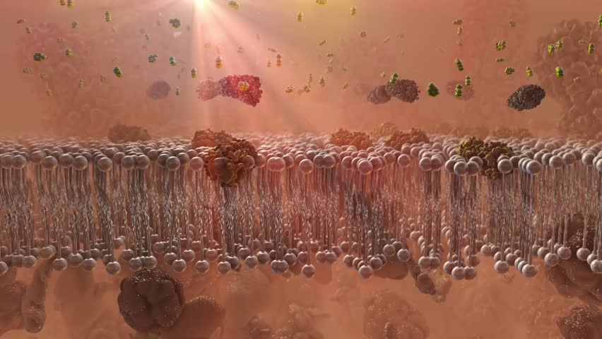 Insulin receptor in depth of field shown accepting insulin with cortisol buildup causing more insulin resistance to prevent glucose being absorbed in cells