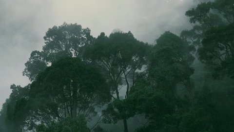Evaporation in humid tropical forest during monsoon rain season. Timelapse video