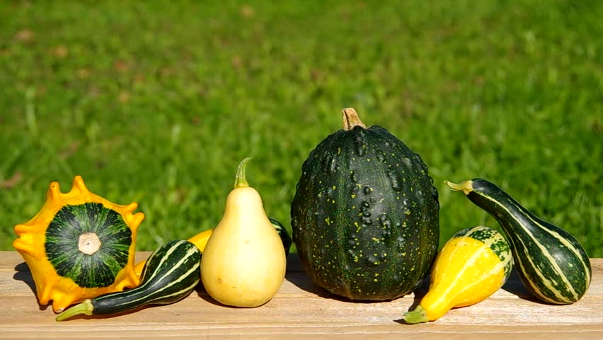 Ornamental pumpkins on wooden table and green background  | Shutterstock HD Video #7512172