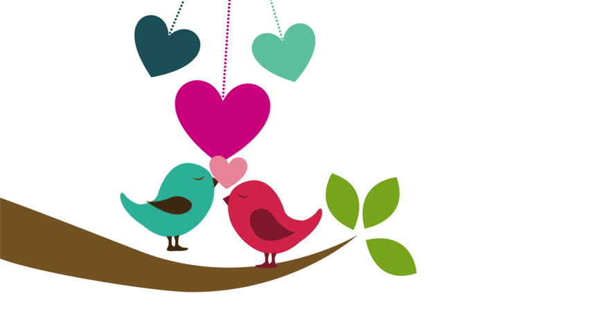 Birds in Love, Animation Design, Stock Footage Video (100 ...