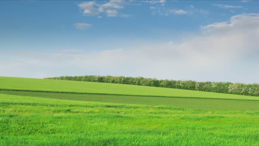 loop of green field. Time lapse HD