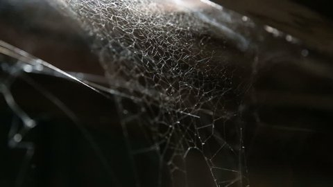 cobwebs and dusty blowing