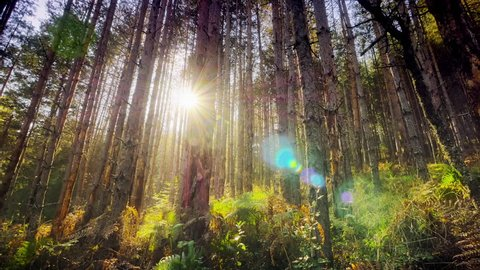 4K Dolly shot into deep dense forest with sunrays shining