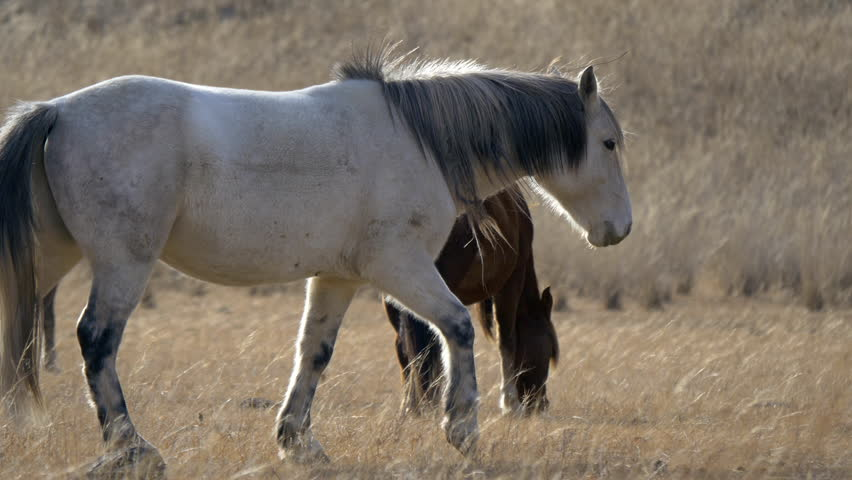 Stock video 4K horses in the valley among the yellow grass | Shutterstock HD Video #7933672