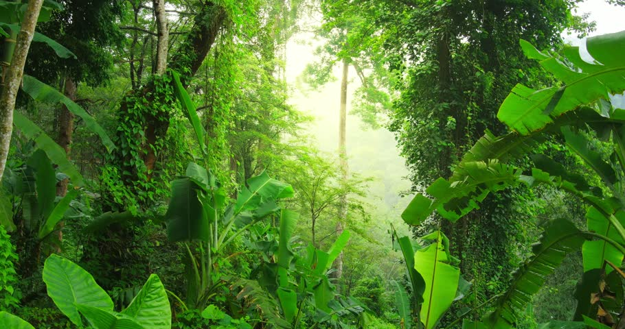 evergreen tropical rain forest nature background jungle landscape stock footage video 8081515. Black Bedroom Furniture Sets. Home Design Ideas