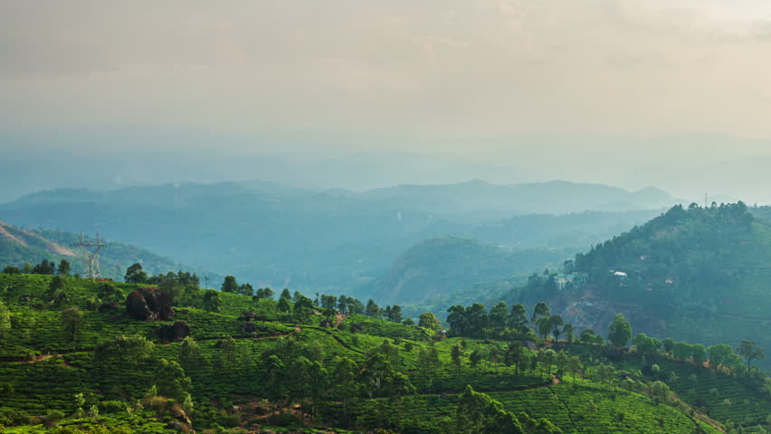 Timelapse of green tea plantations on sunset in Munnar, Kerala, India