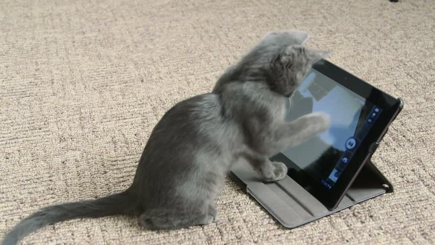 Cute kitten playing with digital tablet computer taking selfie   Shutterstock HD Video #8369749