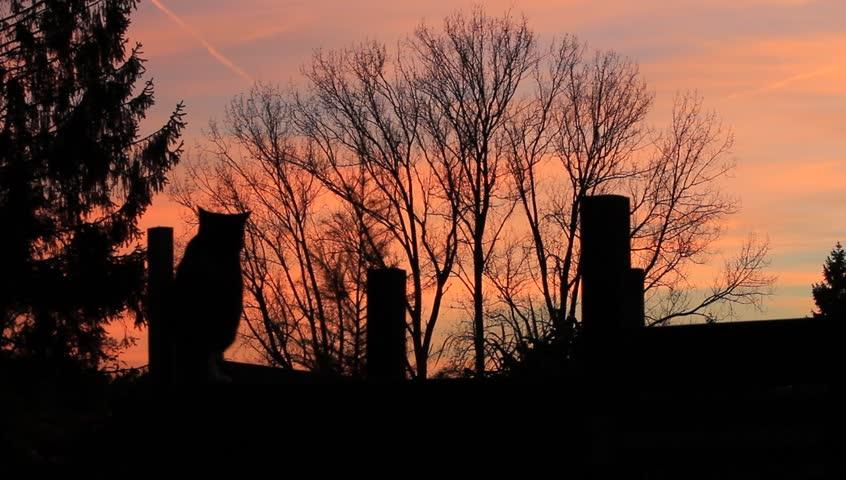 Black Cat In The Dark, Scary | Shutterstock HD Video #8392192