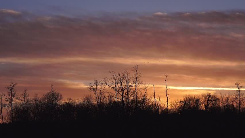 Attractive rural sky with trees silhouette at dusk after sunset - Staffordshire, England: January 2015 | Shutterstock HD Video #8398162