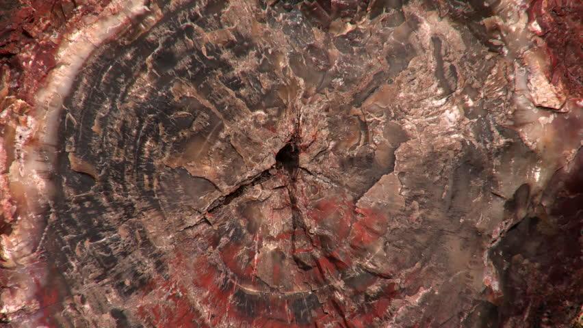 Petrified Forest National Park, Arizona   HD Stock Footage Clip