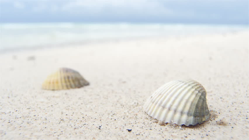 Shells On White Beach Sand By The Sea Stock Footage Video 8453836 ...