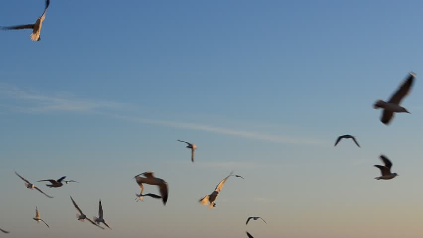 Seagulls over the sea | Shutterstock HD Video #8493052