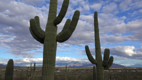 Time Lapse, Puffy white clouds glide in blue sky above giant saguaro cactus that overlook beautiful city of Tucson, Arizona. 4K UHD 3840x2160