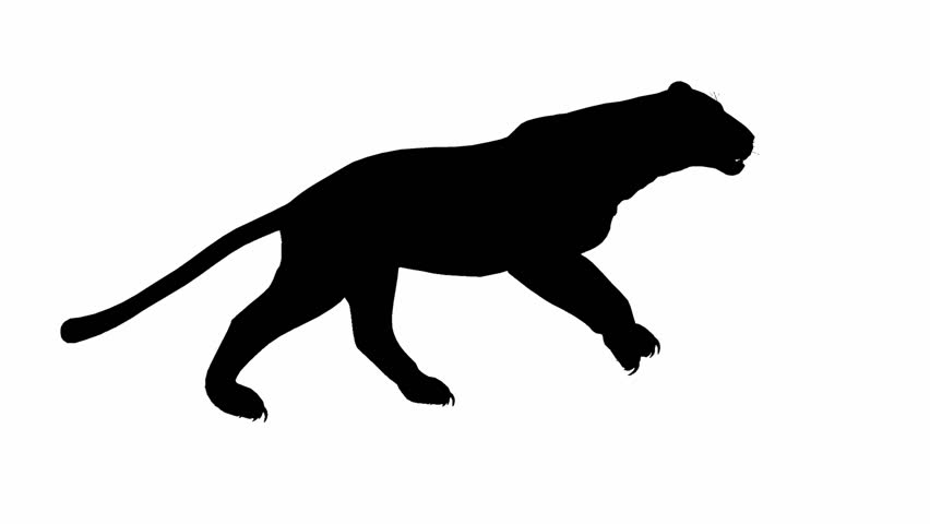 Looping Jaguar/panther/Leopard/puma Animation with silhouette