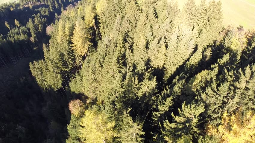 Flyover a Forrest in Autumn - Aerial Flight  | Shutterstock HD Video #8618872