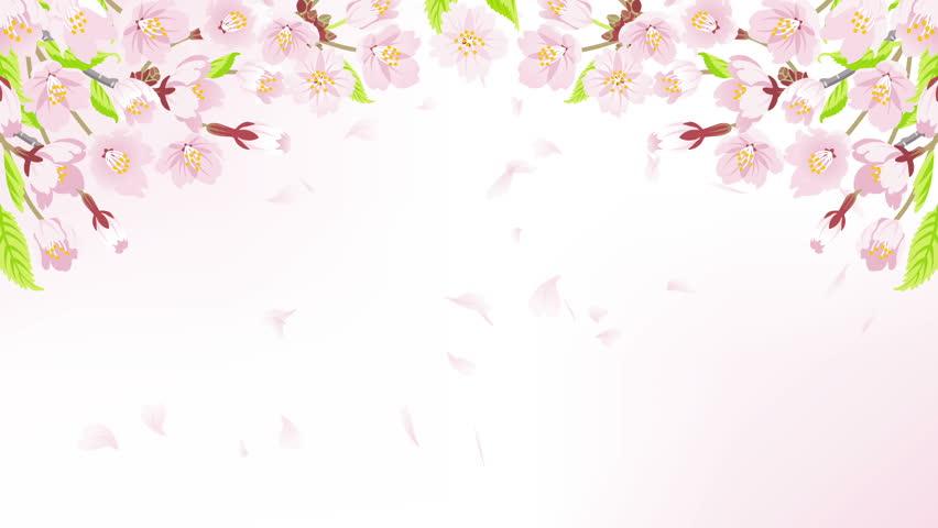 Animation Of Falling Petals Of Sakura With Flowers Sakura