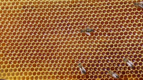 Frame with bee honeycombs filled with honey and bees