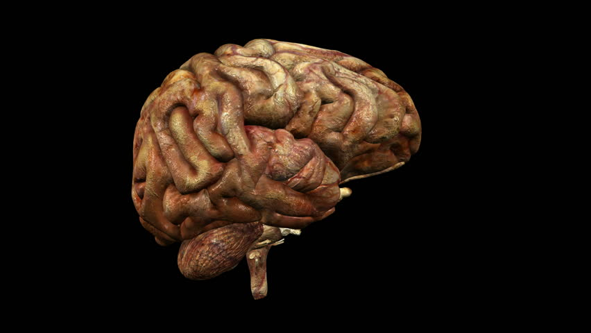 photo-realistic looping unhealthy brain animation with alpha matte