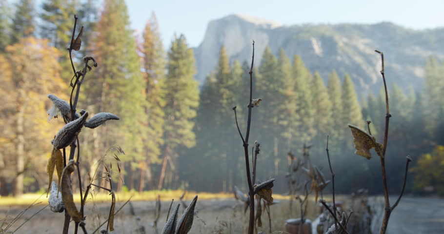 Frozen meadows at Yosemite National Park. Half Dome can be seen in the distance. Yosemite National Park, California is visited by over 3.7 million tourists yearly. Shot on Red Epic.