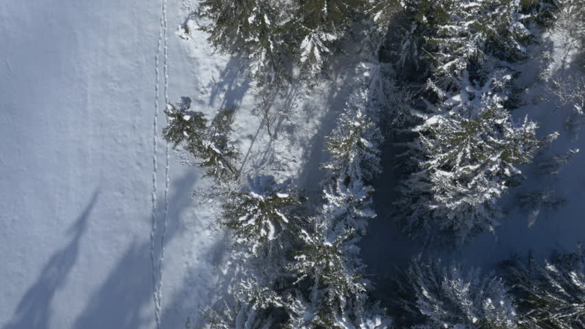 Aerial, vertical - Snow covered trees at the edge of a field with a footprints on it | Shutterstock HD Video #8872402